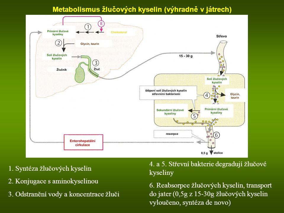 Metabolismus žlučových kyselin (výhradně v játrech)