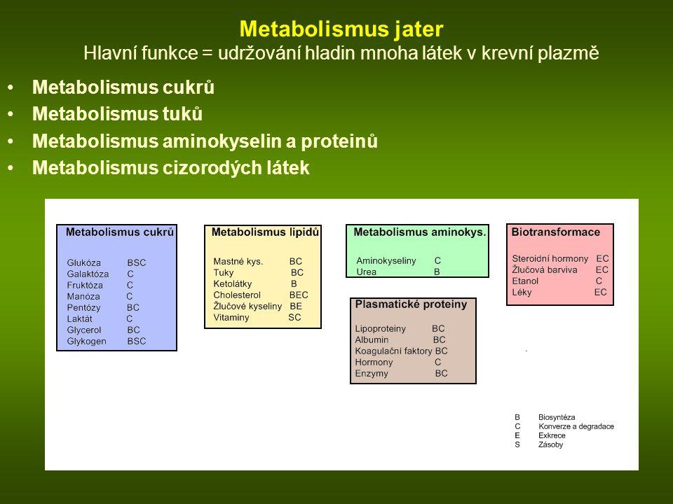 Metabolismus jater Hlavní funkce = udržování hladin mnoha látek v krevní plazmě