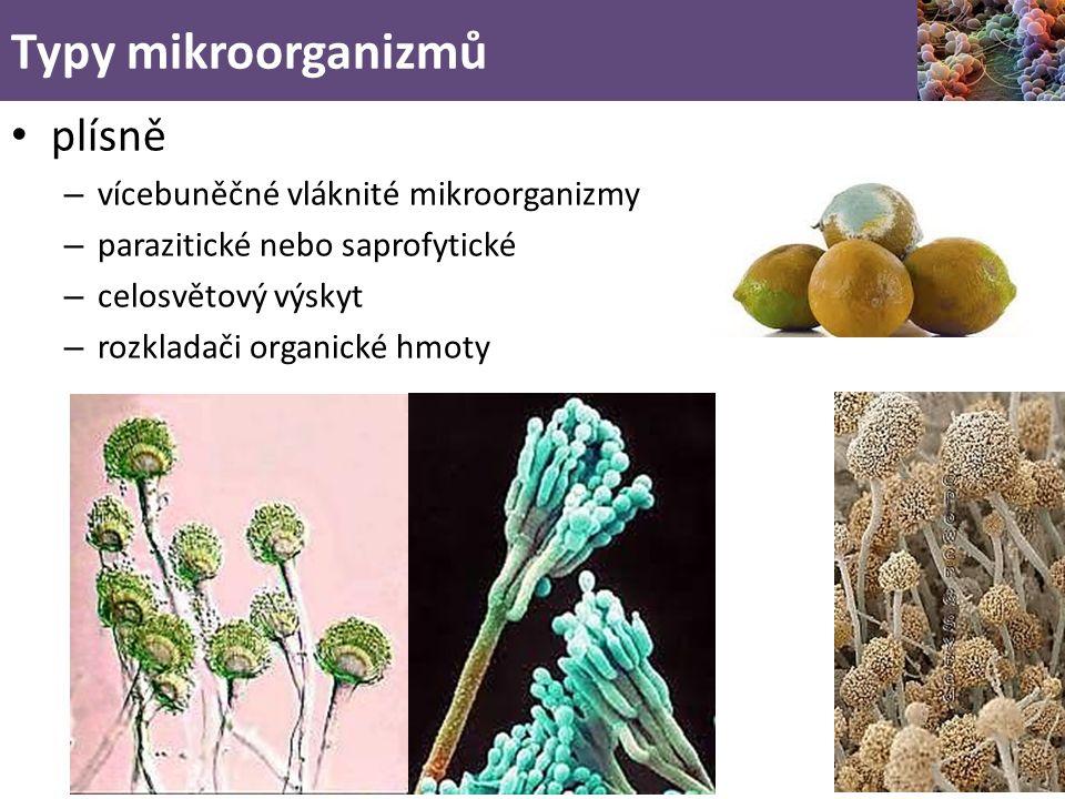 Typy mikroorganizmů plísně vícebuněčné vláknité mikroorganizmy