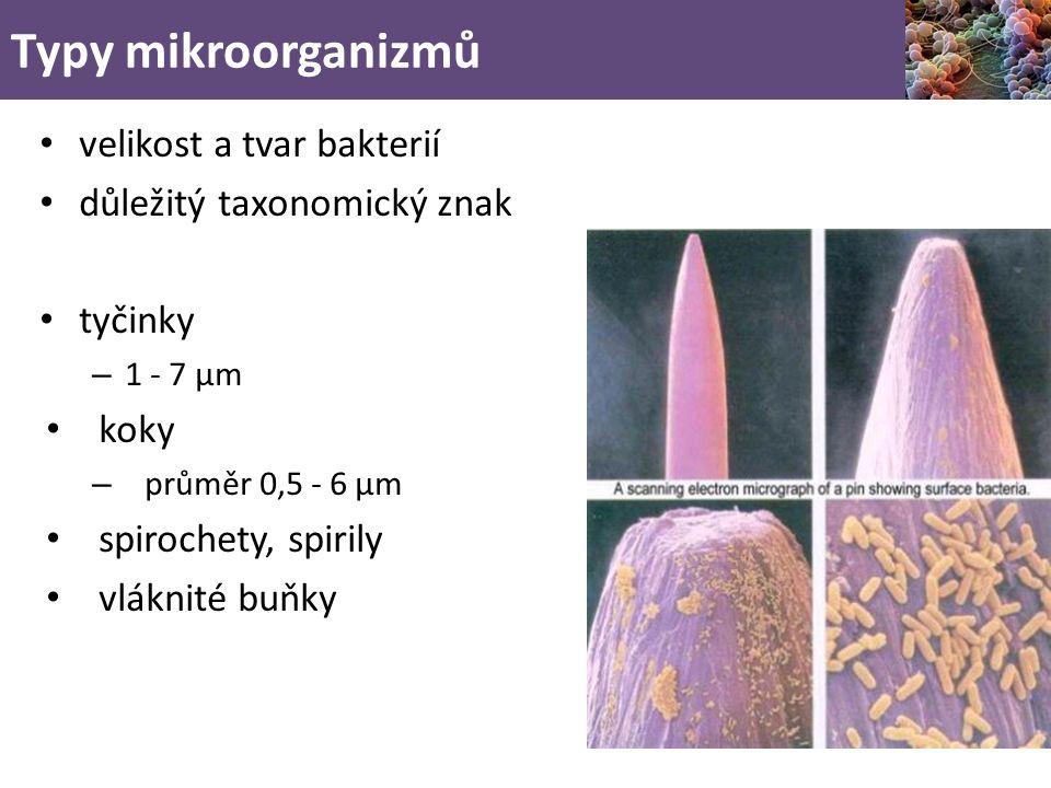 Typy mikroorganizmů velikost a tvar bakterií důležitý taxonomický znak