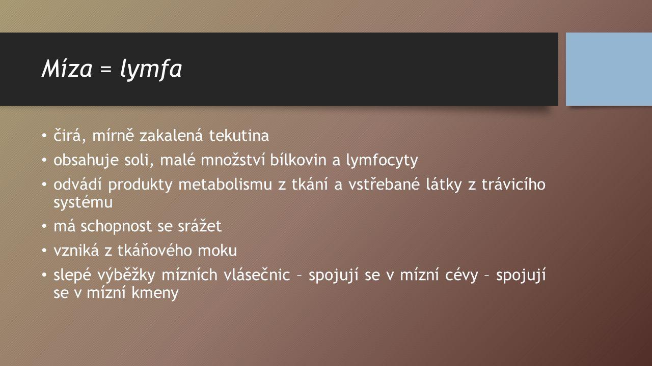 Míza = lymfa čirá, mírně zakalená tekutina
