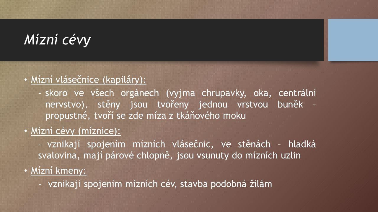 Mízní cévy Mízní vlásečnice (kapiláry):