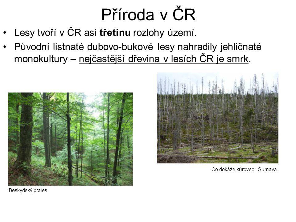 Příroda v ČR Lesy tvoří v ČR asi třetinu rozlohy území.
