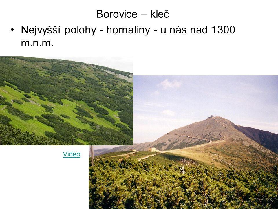 Nejvyšší polohy - hornatiny - u nás nad 1300 m.n.m.