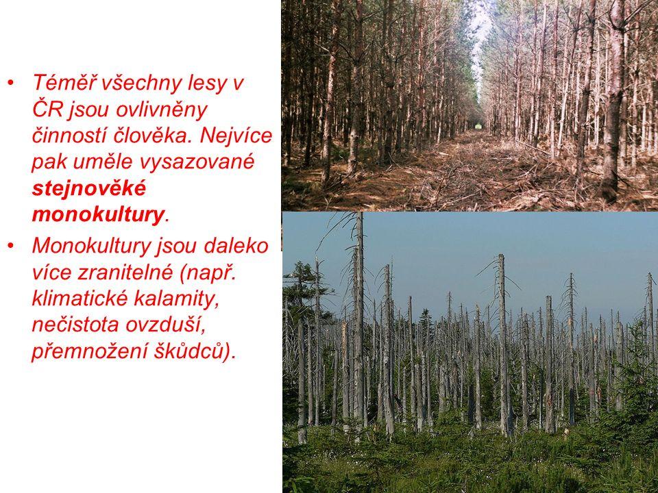 Téměř všechny lesy v ČR jsou ovlivněny činností člověka