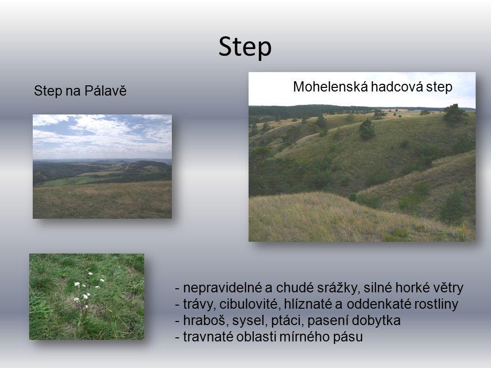Step Mohelenská hadcová step Step na Pálavě