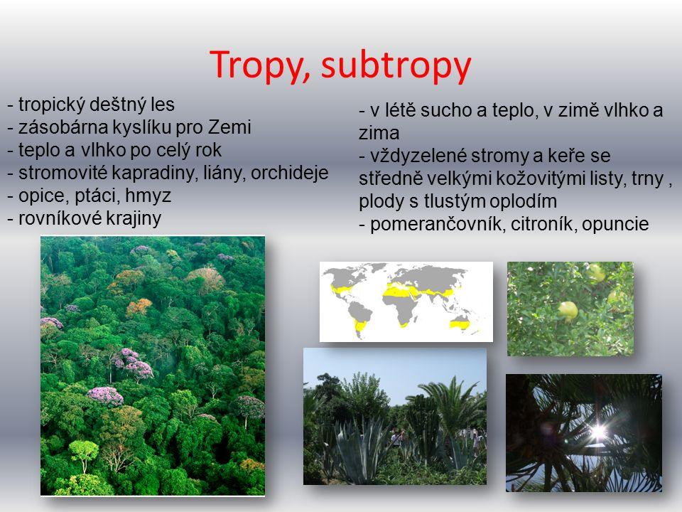 Tropy, subtropy - tropický deštný les