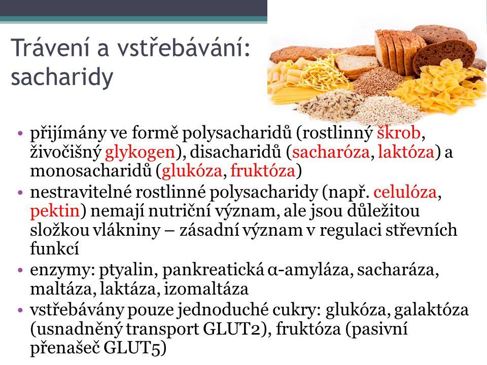 Trávení a vstřebávání: sacharidy