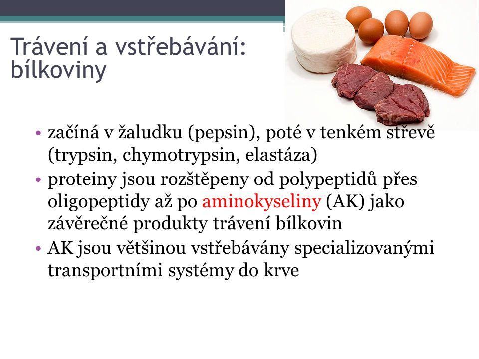 Trávení a vstřebávání: bílkoviny