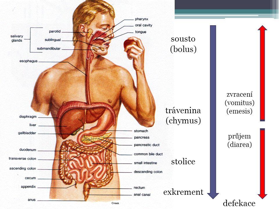 sousto (bolus) trávenina (chymus) stolice exkrement defekace zvracení