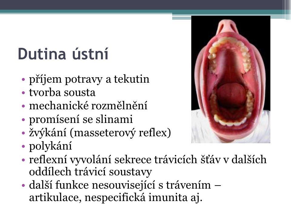 Dutina ústní příjem potravy a tekutin tvorba sousta