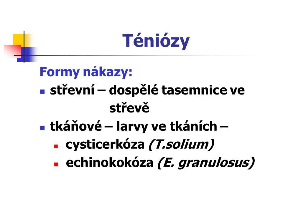 Téniózy Formy nákazy: střevní – dospělé tasemnice ve střevě
