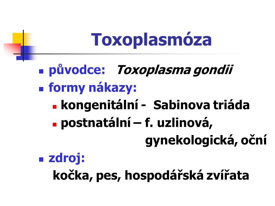 Toxoplasmóza původce: Toxoplasma gondii formy nákazy: