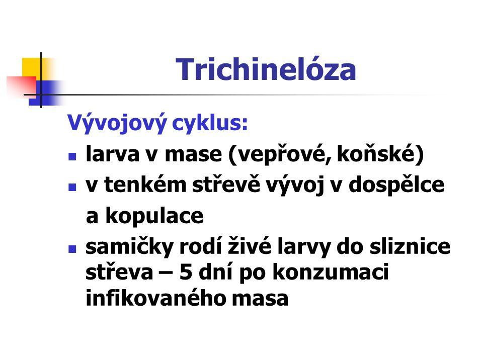 Trichinelóza Vývojový cyklus: larva v mase (vepřové, koňské)