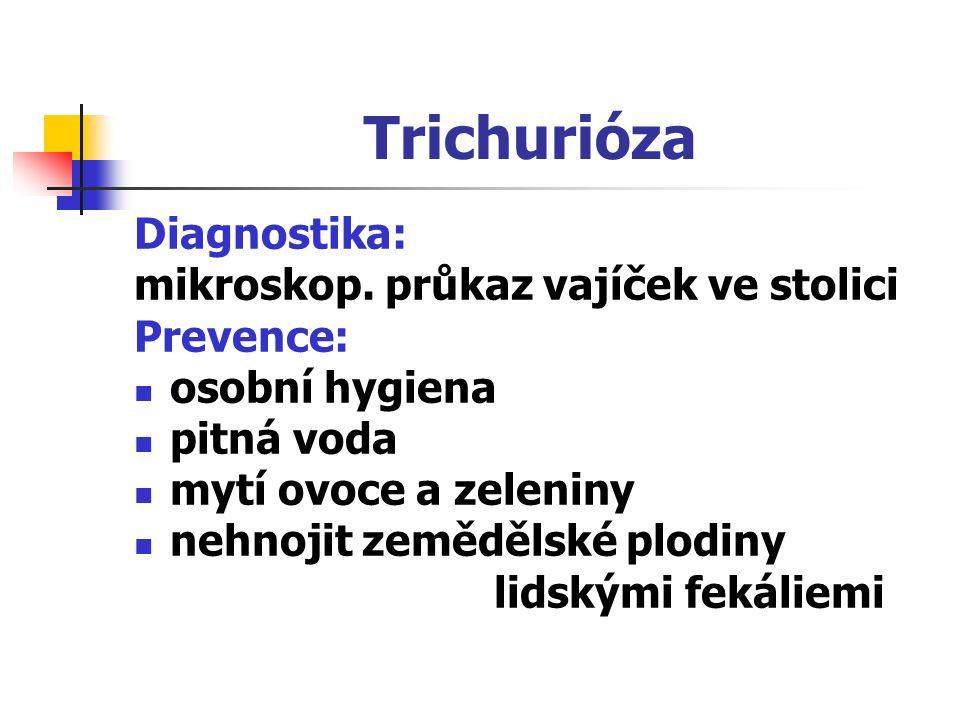 Trichurióza Diagnostika: mikroskop. průkaz vajíček ve stolici