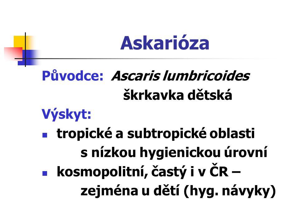 Askarióza Původce: Ascaris lumbricoides škrkavka dětská Výskyt: