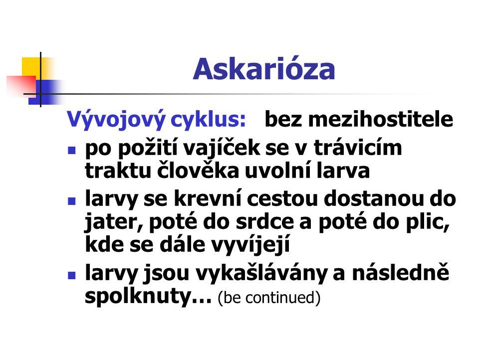Askarióza Vývojový cyklus: bez mezihostitele