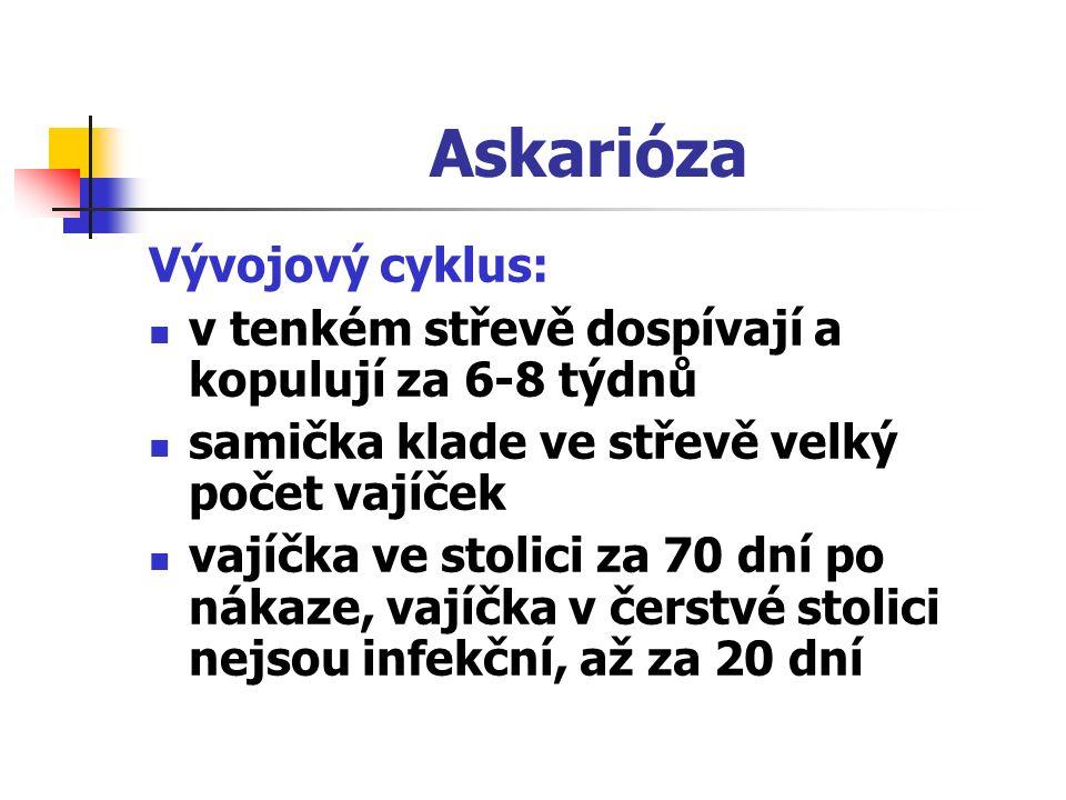 Askarióza Vývojový cyklus: