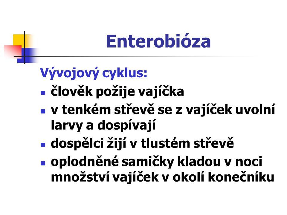 Enterobióza Vývojový cyklus: člověk požije vajíčka