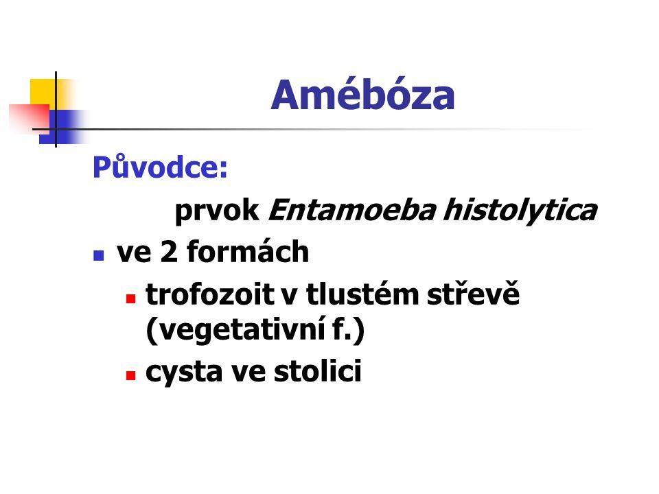 Amébóza Původce: prvok Entamoeba histolytica ve 2 formách