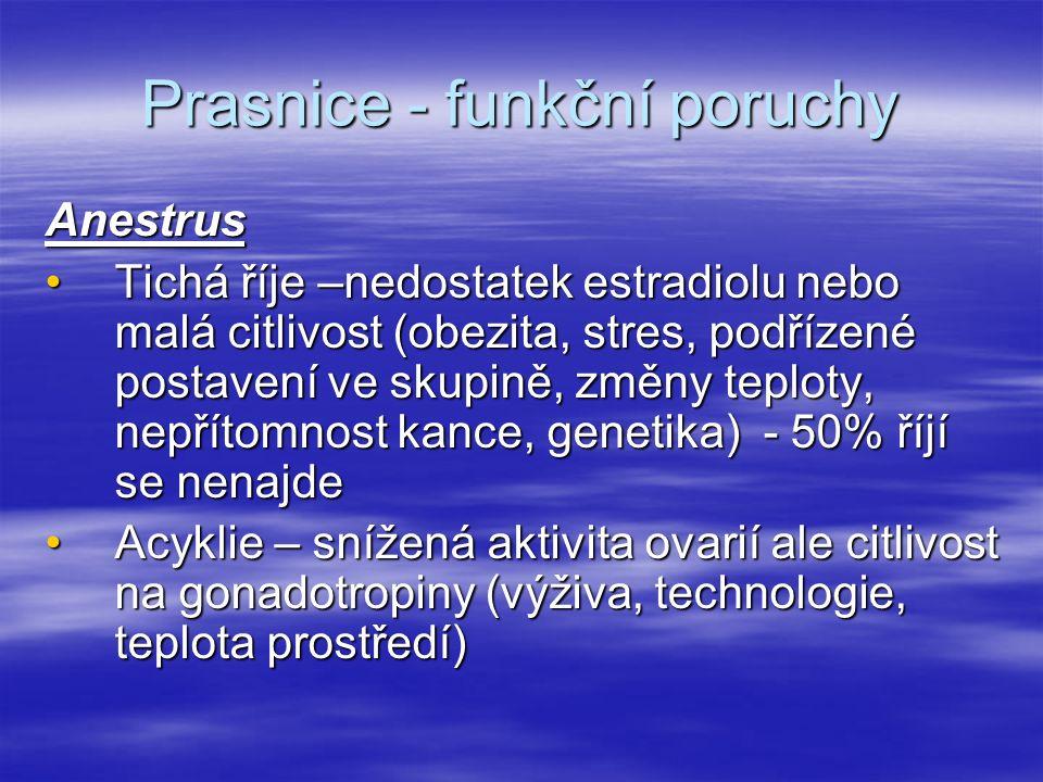 Prasnice - funkční poruchy