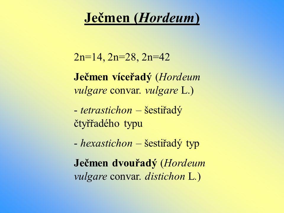 Ječmen (Hordeum) 2n=14, 2n=28, 2n=42