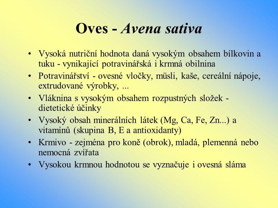 Oves - Avena sativa Vysoká nutriční hodnota daná vysokým obsahem bílkovin a tuku - vynikající potravinářská i krmná obilnina.