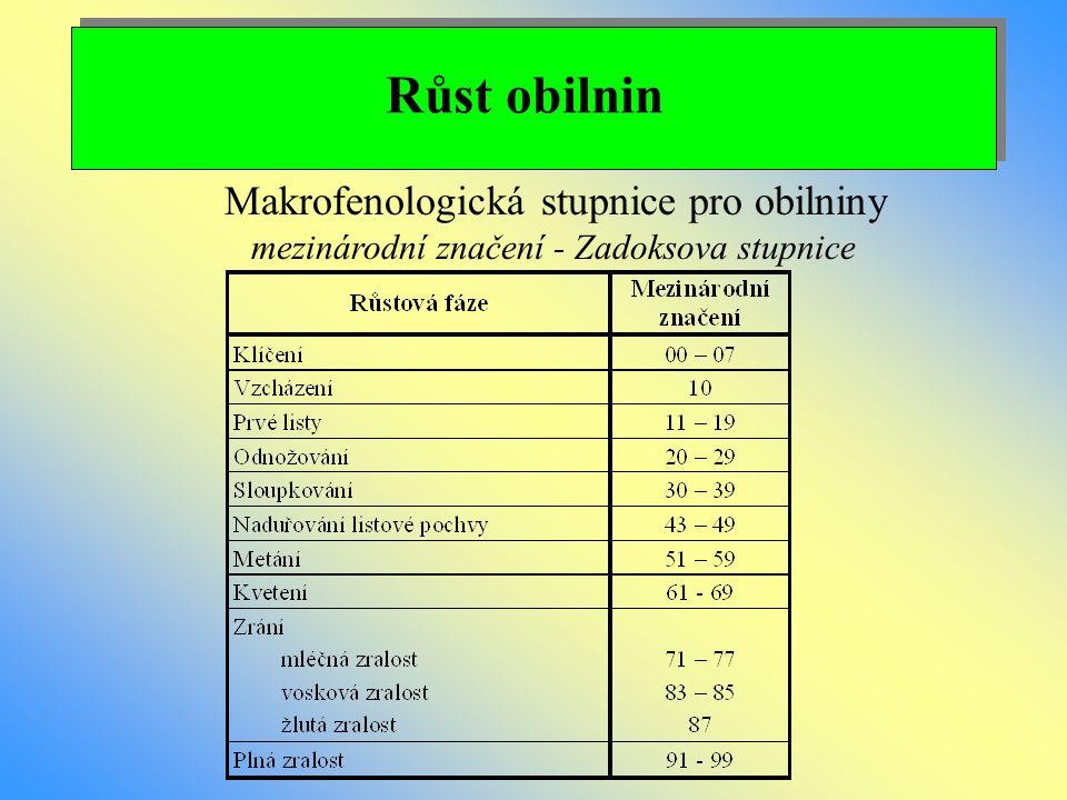 Růst obilnin Makrofenologická stupnice pro obilniny
