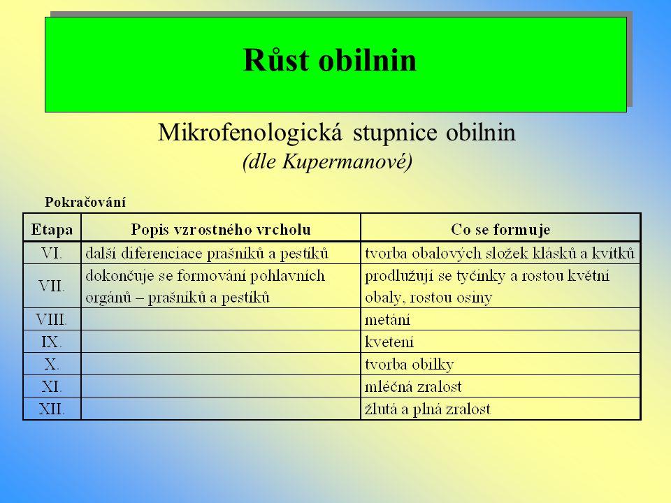 Růst obilnin Mikrofenologická stupnice obilnin (dle Kupermanové)