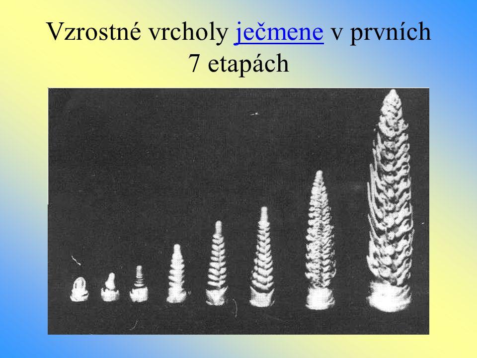 Vzrostné vrcholy ječmene v prvních 7 etapách