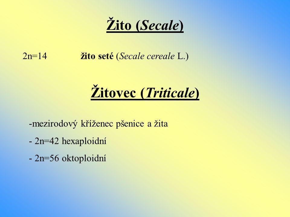 Žito (Secale) Žitovec (Triticale)