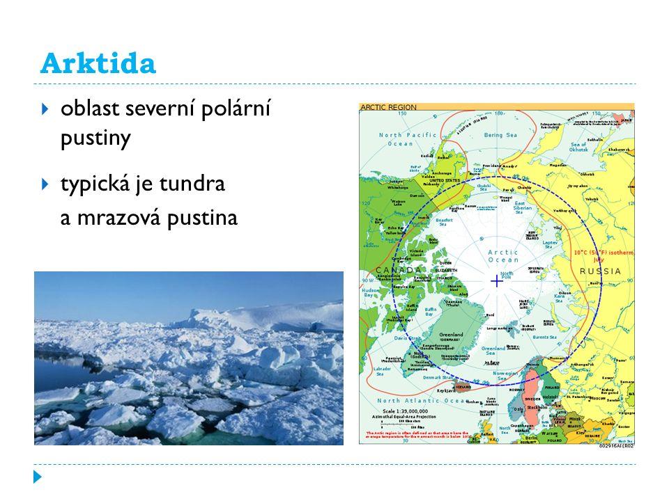 Arktida oblast severní polární pustiny typická je tundra