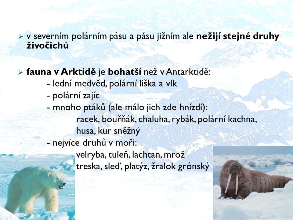 v severním polárním pásu a pásu jižním ale nežijí stejné druhy živočichů