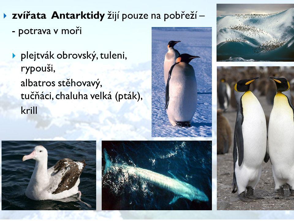 zvířata Antarktidy žijí pouze na pobřeží –