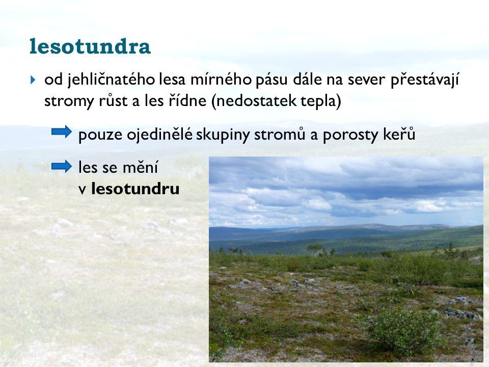 lesotundra od jehličnatého lesa mírného pásu dále na sever přestávají stromy růst a les řídne (nedostatek tepla)