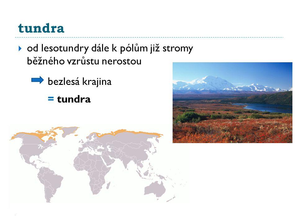 tundra od lesotundry dále k pólům již stromy běžného vzrůstu nerostou