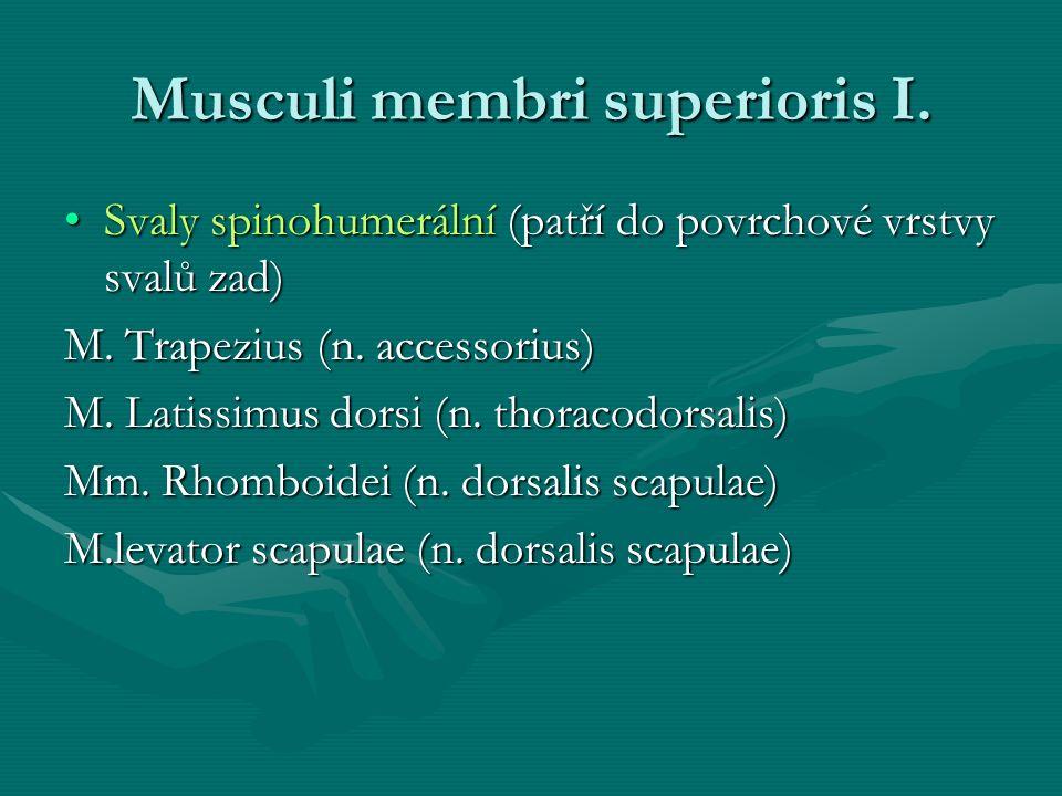 Musculi membri superioris I.