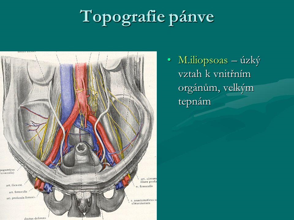 Topografie pánve M.iliopsoas – úzký vztah k vnitřním orgánům, velkým tepnám