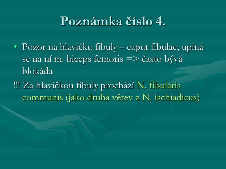 Poznámka číslo 4. Pozor na hlavičku fibuly – caput fibulae, upíná se na ní m. biceps femoris => často bývá blokáda.