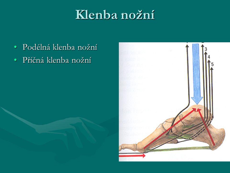 Klenba nožní Podélná klenba nožní Příčná klenba nožní