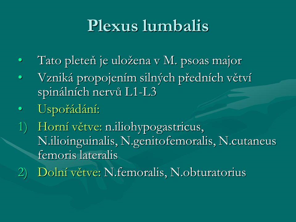 Plexus lumbalis Tato pleteň je uložena v M. psoas major