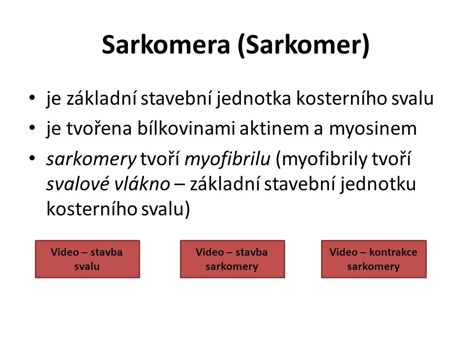 Video – stavba sarkomery Video – kontrakce sarkomery