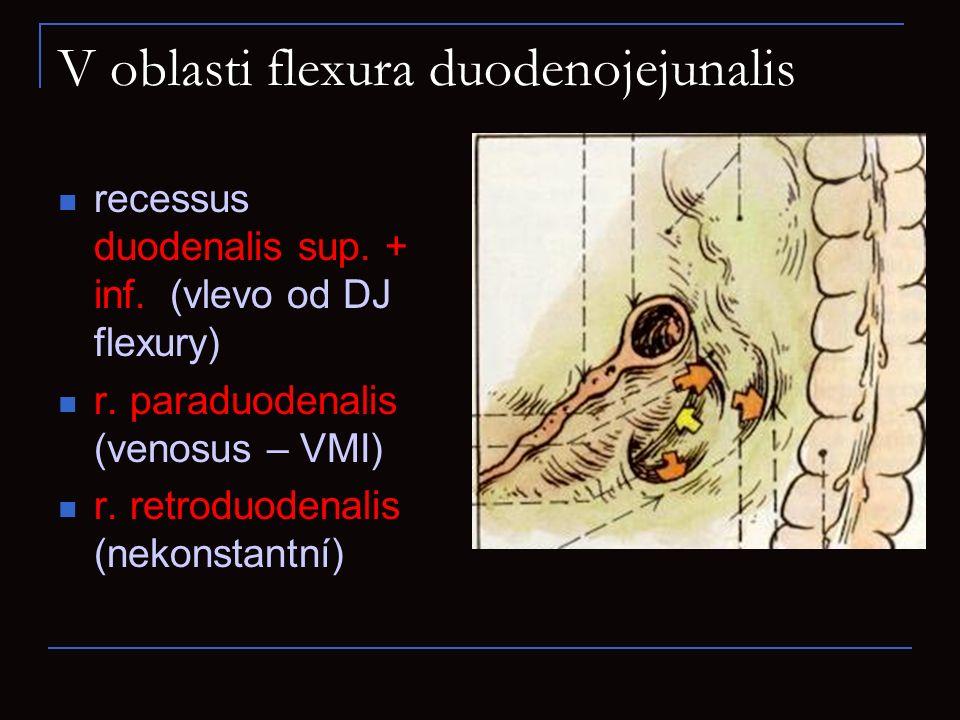 V oblasti flexura duodenojejunalis