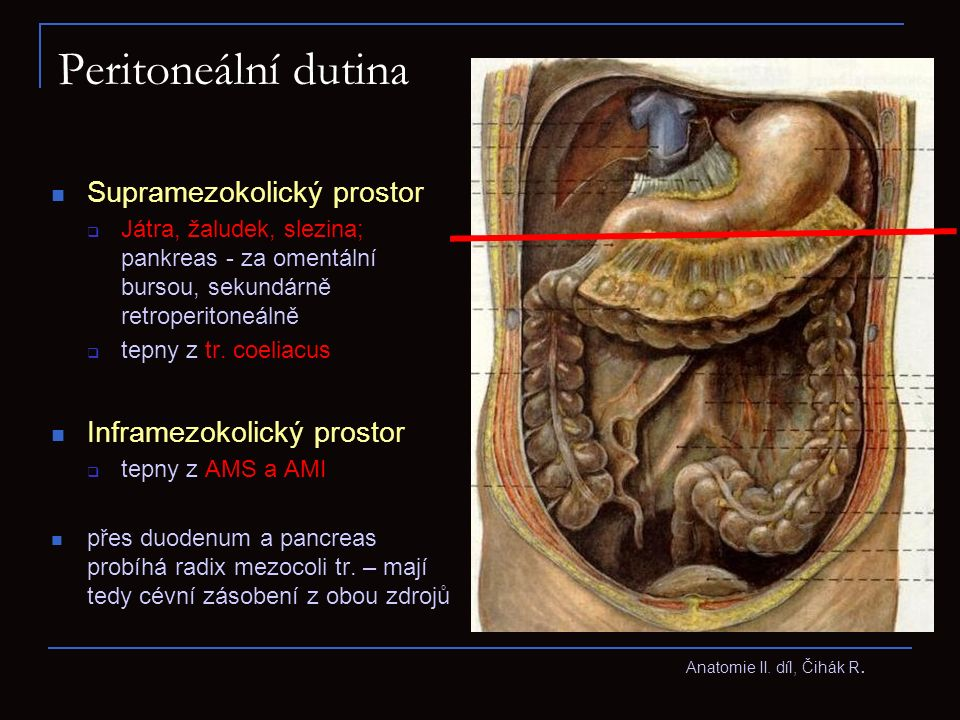 Peritoneální dutina Supramezokolický prostor Inframezokolický prostor