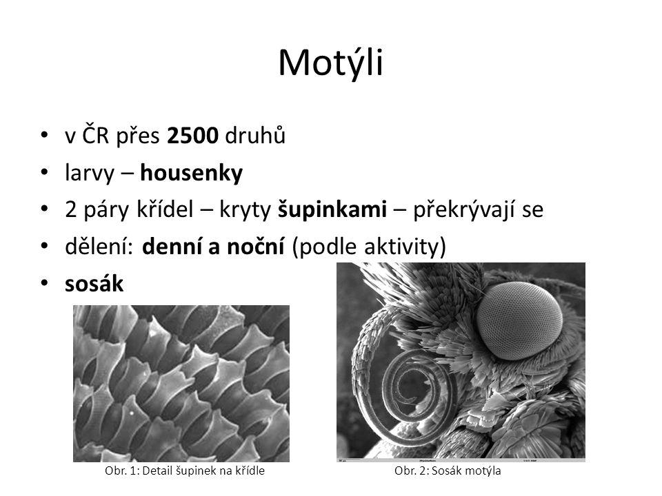 Motýli v ČR přes 2500 druhů larvy – housenky