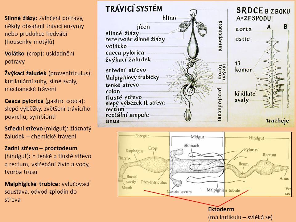 Slinné žlázy: zvlhčení potravy, někdy obsahují trávicí enzymy nebo produkce hedvábí (housenky motýlů)