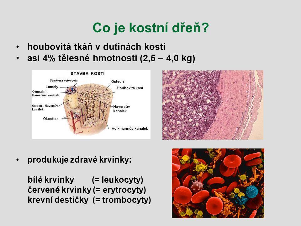 Co je kostní dřeň houbovitá tkáň v dutinách kostí