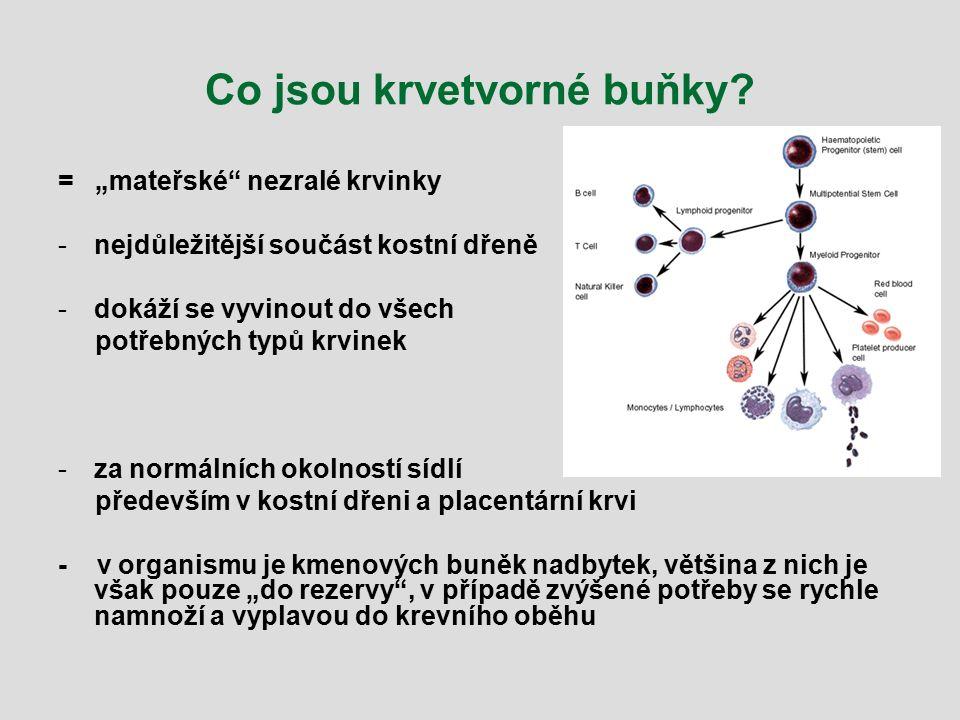 Co jsou krvetvorné buňky