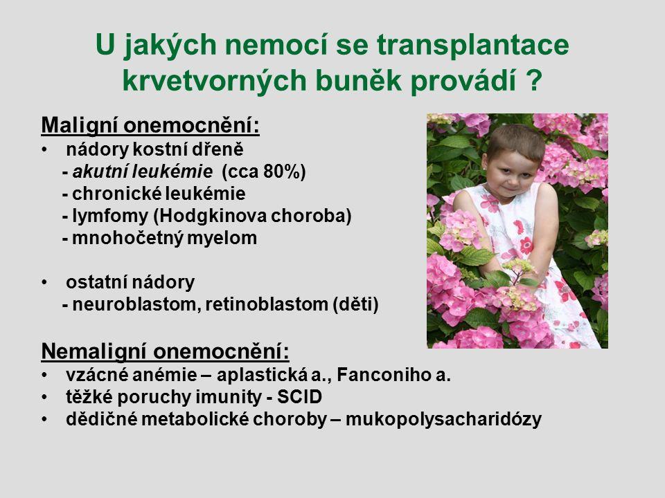 U jakých nemocí se transplantace krvetvorných buněk provádí