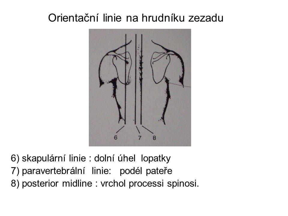 Orientační linie na hrudníku zezadu